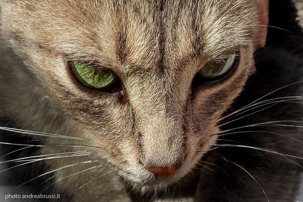 gato portrait