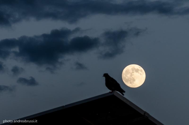 il piccione e la luna