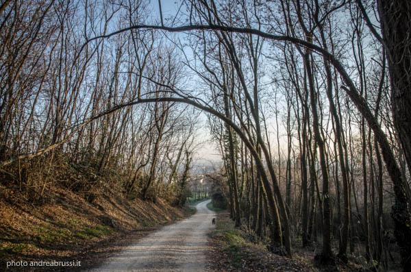 Montello passeggiata_032-2