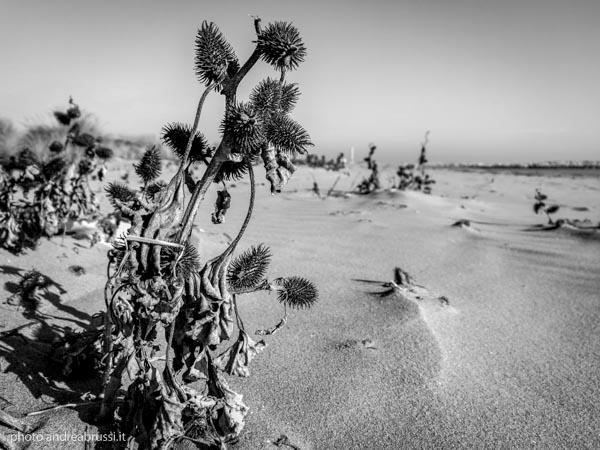 andreabrussi.it - Saluto al mare 2017