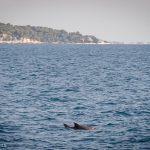 andreabrussi.it - delfini