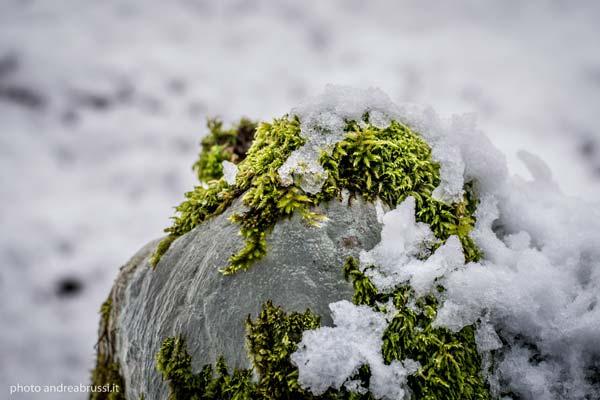 andreabrussi.it - cansiglio con la neve