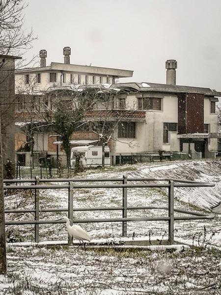 andreabrussi.it - garzetta nella neve
