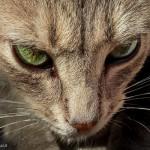 gato-portrait