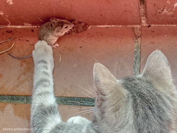 Gatto e topo