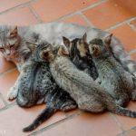 andreabrussi.it - Famiglia felina