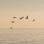 Saluto al mare Lignano_2020